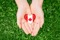 Hands palms holding round badge with red white canadian flag maple leaf on green grass. Macro closeup shot of hands palms holding round badge with red white royalty free stock photography