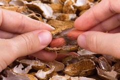 Hands peeling peanuts among shells on the table Stock Photography