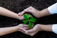 Hands People Team Work family Cupping young Plant Nurture Environmental and reduce global warming earth. Ecology Concept royalty free stock images