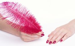 Hands with pink manicure holding feather Royalty Free Stock Image