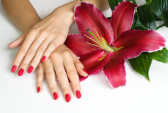 Hands with pink manicure and lily. Beautiful woman hands with pink manicure and lily isolated on white Royalty Free Stock Photo