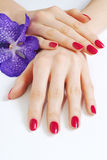 Hands with pink manicure and purple orchid Stock Photo