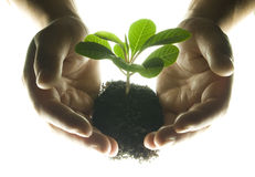 Hands and plant Stock Photos