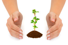 Hands and plant Stock Images