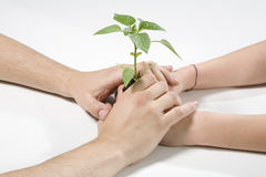 Hands with a plant. Green Royalty Free Stock Images