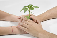 Hands with a plant. Green Stock Image
