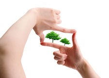Hands and plant isolated on white background Royalty Free Stock Photography
