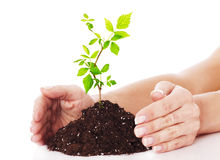 Hands and plant. Stock Photo