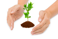 Hands and plant Royalty Free Stock Photography