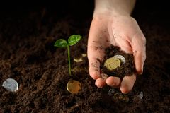 Hands with plant and money Stock Photo