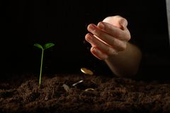 Hands with plant and money Stock Images