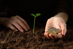 Hands with plant and money Royalty Free Stock Photos