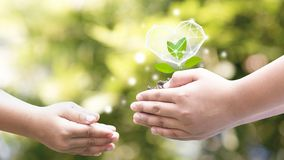 Hands  Planted Seedlings Is Protected By The Heart, Loving The Environment And Protecting Nature Environment Day Royalty Free Stock Image
