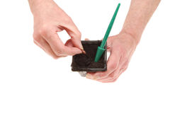 Hands planting a seed. Pair of hands planting a runner bean seed into a plastic pot isolated against white Stock Images