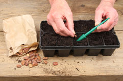 Hands planting seeds Royalty Free Stock Photos