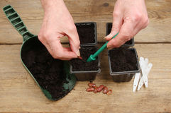 Hands planting seeds Royalty Free Stock Photo