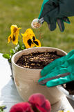 Hands planting seeds into flower pot Stock Image