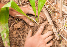 Hands planting a tree Stock Photo