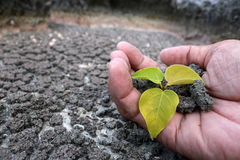 Hands planting tree on the drought ground stock images