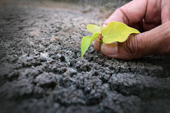 Hands planting tree on the drought ground royalty free stock photo