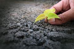 Hands planting tree on the drought ground stock photography