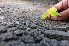 Hands planting tree on the drought ground stock photo