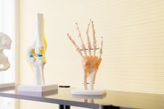Hands plastic anatomy physiology model a bones in hospital royalty free stock photo