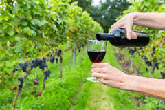 Hands pouring red wine in glass at vineyard Royalty Free Stock Photo