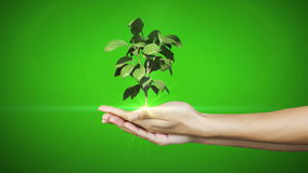 Hands presenting digital green plant growing Royalty Free Stock Photo