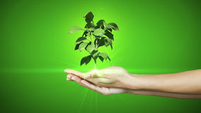 Hands presenting digital green plant growing Stock Photo