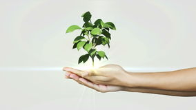 Hands presenting digital green plant growing Stock Images