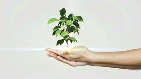 Hands presenting digital green plant growing stock video footage