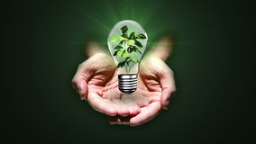 Hands presenting light bulb with plant stock video footage