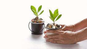 Hands protect growing plant of coins represented saving money. Growing up. Business, finance and banking concept royalty free stock image