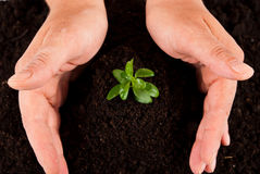 Hands protect plant. Two human hands protect a small green plant in soil,check also my collection stock photo