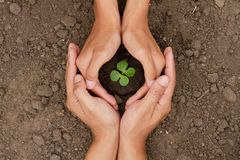 Hands are protect a small tree or plant grow on soil. Top view. Seedling grow on soil are protected by two hand of people who love tree. Environment day and stock photo