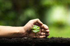 Hands protect trees, plant trees, hands on trees, love nature Stock Photo
