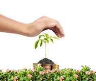 Hands Protect Your and a plant Royalty Free Stock Image
