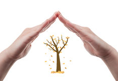 Hands protecting autumn tree Royalty Free Stock Image