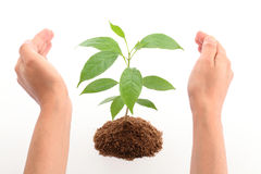 Hands protecting baby plant Stock Image
