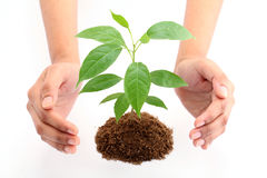 Hands protecting baby plant Royalty Free Stock Images