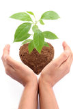 Hands protecting  baby plant Stock Photography