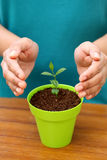 Hands protecting a baby plant Royalty Free Stock Photo