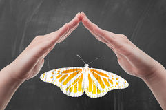 Hands protecting butterfly. As nature and fauna preservation or conservation concept seminar on school blackboard Royalty Free Stock Image