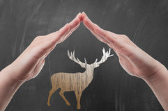 Hands protecting deer draw on blackboard Royalty Free Stock Photos