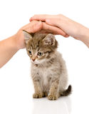 Hands protecting a kitten. isolated on white backg Stock Photography