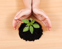 Hands protecting a plant Stock Images