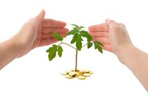 Hands protecting a plant. (isolated) - concept for new business royalty free stock photos