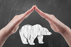 Hands protecting polar bear draw on blackboard. As animal protection and poaching concept Royalty Free Stock Photography