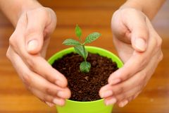 Hands protecting a small plant Stock Photo